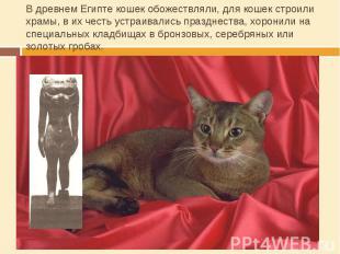 В древнем Египте кошек обожествляли, для кошек строили храмы, в их честь устраив