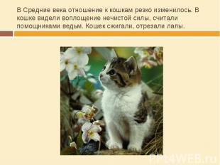 В Средние века отношение к кошкам резко изменилось. В кошке видели воплощение не