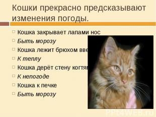 Кошки прекрасно предсказывают изменения погоды. Кошка закрывает лапами носБыть м