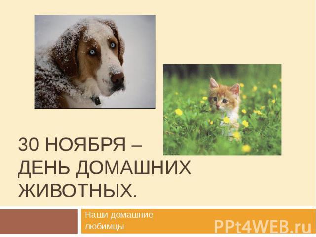 30 ноября – день домашних животных.