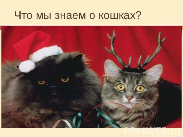 Что мы знаем о кошках? Сколько лет живут кошки?От 12 до 20 летСколько весят кошки?От 3 до 6 кгЧей укус опаснее: собаки, кошки или человека?Человека, у него во рту больше микробовКакие уникальные свойства есть у кошки?Всегда падает на лапы, находят д…