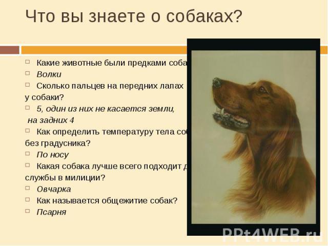 Что вы знаете о собаках? Какие животные были предками собак?ВолкиСколько пальцев на передних лапах у собаки?5, один из них не касается земли, на задних 4Как определить температуру тела собаки без градусника?По носуКакая собака лучше всего подходит д…