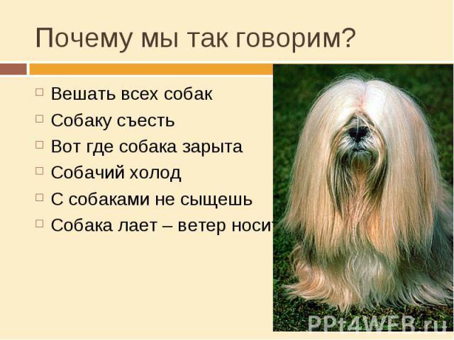 Почему мы так говорим? Вешать всех собакСобаку съестьВот где собака зарытаСобачий холодС собаками не сыщешьСобака лает – ветер носит