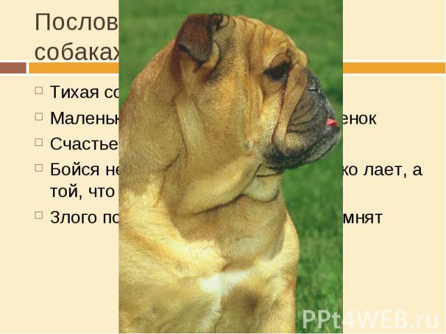 Пословицы и поговорки о собаках Тихая собака пуще кусаетМаленькая собачка до старости щенокСчастье наше собаки съелиБойся не той собаки, которая громко лает, а той, что исподтишка кусаетЗлого пса и после смерти долго помнят