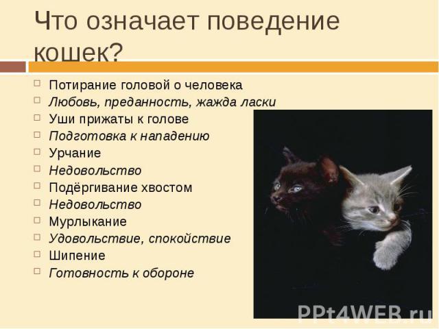 Что означает поведение кошек? Потирание головой о человекаЛюбовь, преданность, жажда ласкиУши прижаты к головеПодготовка к нападениюУрчаниеНедовольствоПодёргивание хвостомНедовольствоМурлыканиеУдовольствие, спокойствиеШипениеГотовность к обороне