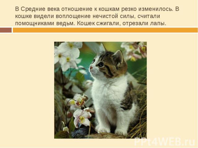 В Средние века отношение к кошкам резко изменилось. В кошке видели воплощение нечистой силы, считали помощниками ведьм. Кошек сжигали, отрезали лапы.