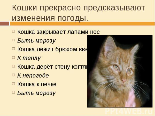 Кошки прекрасно предсказывают изменения погоды. Кошка закрывает лапами носБыть морозуКошка лежит брюхом вверхК теплуКошка дерёт стену когтямиК непогодеКошка к печкеБыть морозу