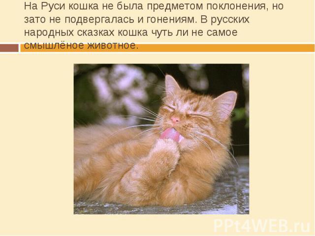 На Руси кошка не была предметом поклонения, но зато не подвергалась и гонениям. В русских народных сказках кошка чуть ли не самое смышлёное животное.
