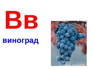 Вввиноград