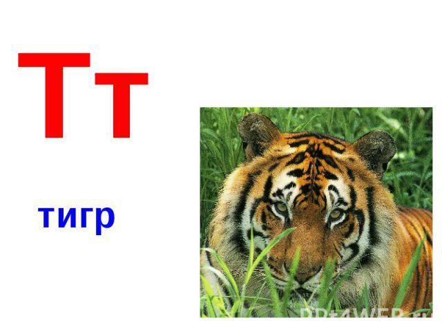 Тттигр