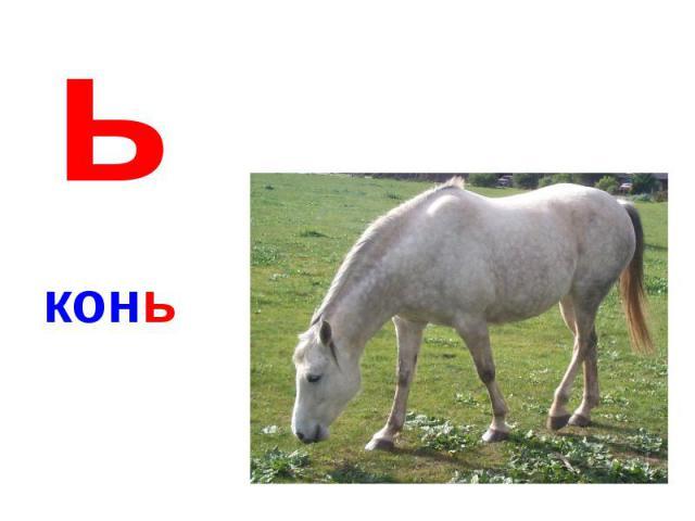 ьконь