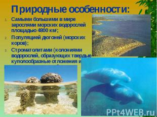 Природные особенности: Самыми большими в мире зарослями морских водорослей площа