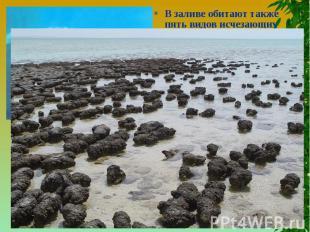 В заливе обитают также пять видов исчезающих морских млекопитающих.Включение в с