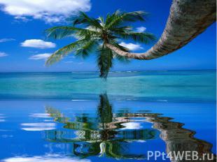 На песке растет густой тропический лес, а в центре острова находятся пресноводны