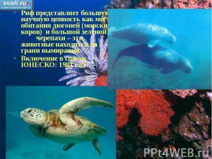 Риф представляет большую научную ценность как место обитания дюгоней (морских ко