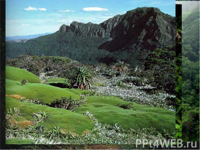 Дождевые леса Восточного побережьягеографические координаты- 28°ю.ш., 150°в.д. Этот природный памятник, включающий в себя несколько охраняемых территорий, расположен в основном, вдоль вертикального сдвига земной коры на восточном побережье Австралии…