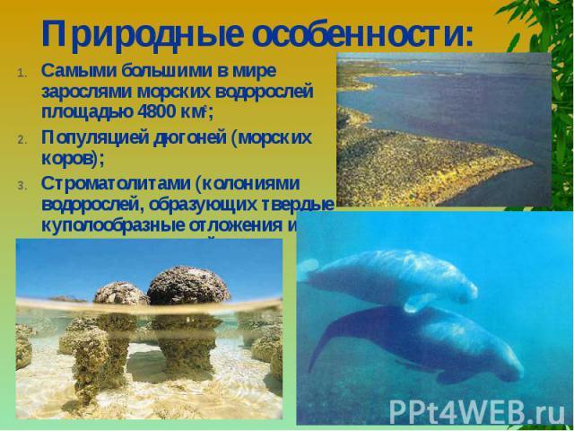 Природные особенности: Самыми большими в мире зарослями морских водорослей площадью 4800 км2;Популяцией дюгоней (морских коров); Строматолитами (колониями водорослей, образующих твердые куполообразные отложения и считающихся одной из древнейших на З…