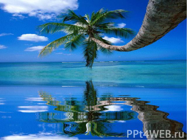 На песке растет густой тропический лес, а в центре острова находятся пресноводные озера, отделенные от моря песчаными дюнами.Сочетание дюн, тропических лесов и пресноводных озер делает этот остров уникальным природным памятником.Включение в список Ю…
