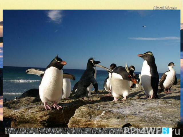 Остров Маккуоригеографические координаты - 55°ю.ш., 159°в.д. Остров Маккуори (34*5 км)- океанический остров в субантарктических водах, лежащий в 1500 км к юго-востоку от Тасмании, приблизительно посередине между Австралией и Антарктидой.