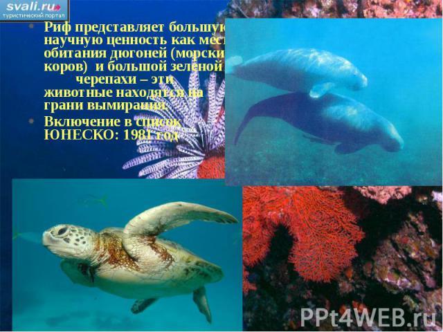 Риф представляет большую научную ценность как место обитания дюгоней (морских коров) и большой зеленой черепахи – эти животные находятся на грани вымирания.Включение в список ЮНЕСКО: 1981 год