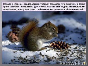 Однако недавние исследования учёных показали, что семечки, а также орехи арахиса