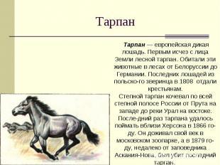 Тарпан Тарпан — европейская дикая лошадь. Первым исчез с лица Земли лесной тарпа