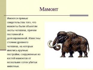 Мамонт Имеются прямые свидетельства того, что мамонты были объектом охоты челове