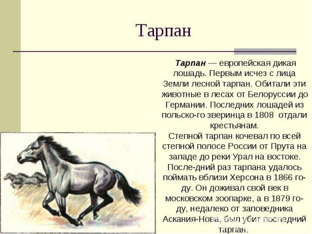 Тарпан Тарпан — европейская дикая лошадь. Первым исчез с лица Земли лесной тарпан. Обитали эти животные в лесах от Белоруссии до Германии. Последних лошадей из польского зверинца в 1808 отдали крестьянам.Степной тарпан кочевал по всей степной полосе…
