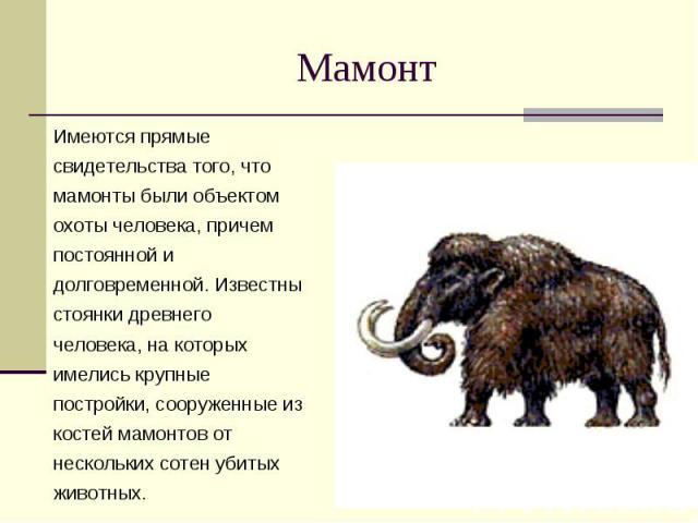 Мамонт Имеются прямые свидетельства того, что мамонты были объектом охоты человека, причем постоянной и долговременной. Известны стоянки древнего человека, на которых имелись крупные постройки, сооруженные из костей мамонтов от нескольких сотен убит…