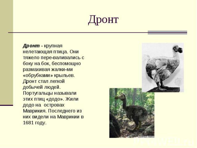 Дронт Дронт - крупная нелетающая птица. Они тяжело переваливались с боку на бок, беспомощно размахивая жалкими «обрубками» крыльев. Дронт стал легкой добычей людей. Португальцы называли этих птиц «додо». Жили додо на островах Маврикия. Последнего из…