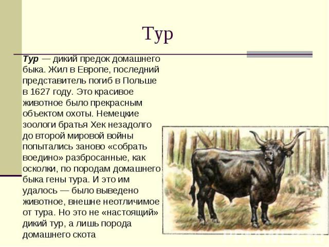 Тур Тур — дикий предок домашнего быка. Жил в Европе, последний представитель погиб в Польше в 1627 году. Это красивое животное было прекрасным объектом охоты. Немецкие зоологи братья Хек незадолго до второй мировой войны попытались заново «собрать в…