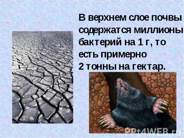 В верхнем слое почвы содержатся миллионы бактерий на 1г, то есть примерно 2тонны на гектар.