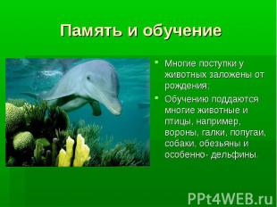 Память и обучение Многие поступки у животных заложены от рождения;Обучению подда
