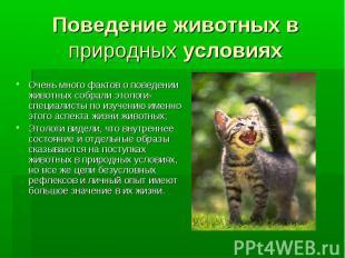 Поведение животных в природных условиях Очень много фактов о поведении животных