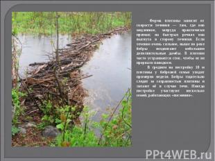 Форма плотины зависит от скорости течения — там, где оно медленное, запруда прак