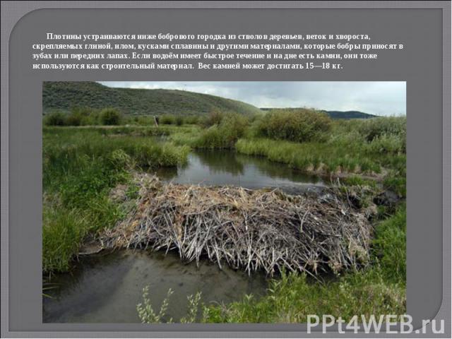 Плотины устраиваются ниже бобрового городка из стволов деревьев, веток и хвороста, скрепляемых глиной, илом, кусками сплавины и другими материалами, которые бобры приносят в зубах или передних лапах. Если водоём имеет быстрое течение и на дне есть к…