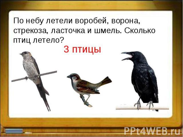 По небу летели воробей, ворона, стрекоза, ласточка и шмель. Сколько птиц летело?