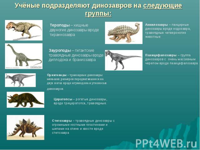 Учёные подразделяют динозавров на следующие группы: Тероподы – хищные двуногие динозавры вроде тираннозавра Зауроподы – гигантские травоядные динозавры вроде диплодока и брахиозавра Орнитоподы – травоядные динозавры меньших размеров передвигавшиеся …