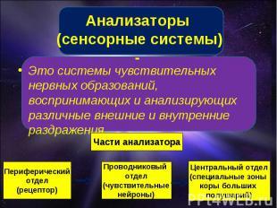 Анализаторы (сенсорные системы) - Это системы чувствительных нервных образований
