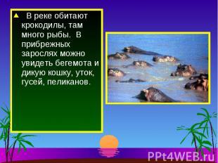 В реке обитают крокодилы, там много рыбы. В прибрежных зарослях можно увидеть бе