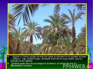 . Вдали от Нила среди песков пустыни встречаются островки зелени – оазисы. Там,