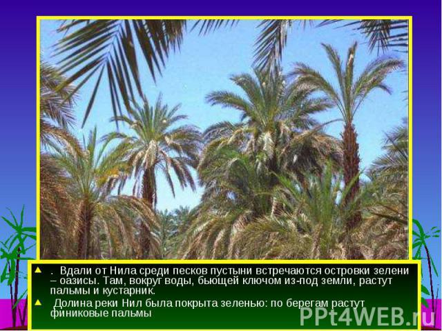 . Вдали от Нила среди песков пустыни встречаются островки зелени – оазисы. Там, вокруг воды, бьющей ключом из-под земли, растут пальмы и кустарник. Долина реки Нил была покрыта зеленью: по берегам растут финиковые пальмы