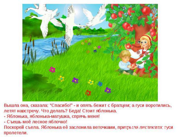 """Вышла она, сказала: """"Спасибо!"""" - и опять бежит с братцем; а гуси воротились, летят навстречу. Что делать? Беда! Стоит яблонька.- Яблонька, яблонька-матушка, спрячь меня!- Съешь моё лесное яблочко!Поскорей съела. Яблонька её заслонила веточками, прик…"""