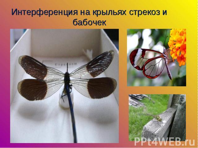 Интерференция на крыльях стрекоз и бабочек