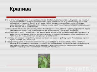 Крапива Это многолетнее двудомное травянисто растение. Стебель тупочетырёхгранны