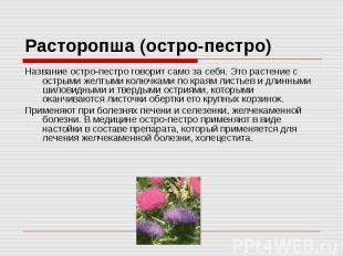 Расторопша (остро-пестро) Название остро-пестро говорит само за себя. Это растен