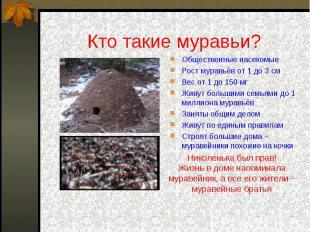 Кто такие муравьи? Общественные насекомыеРост муравьёв от 1 до 3 смВес от 1 до 1