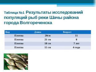 Таблица №1 Результаты исследований популяций рыб реки Шачы района города Волгоре