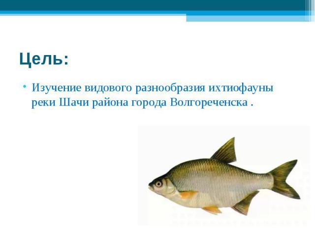 Цель: Изучение видового разнообразия ихтиофауны реки Шачи района города Волгореченска .