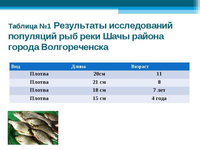 Таблица №1 Результаты исследований популяций рыб реки Шачы района города Волгореченска